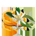 fleur-d-oranger-on.png